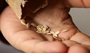 semillas (2)